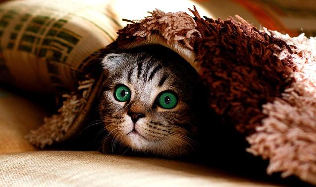 kucing gendut yang lucu